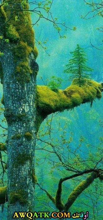 أشجار تحت الماء