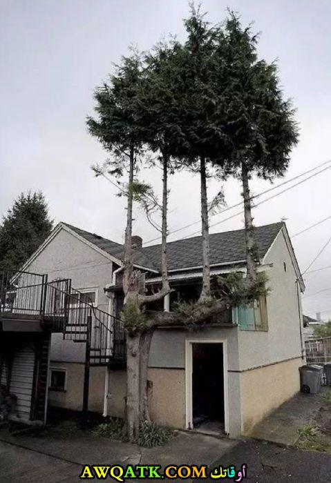 أغرب شجرة