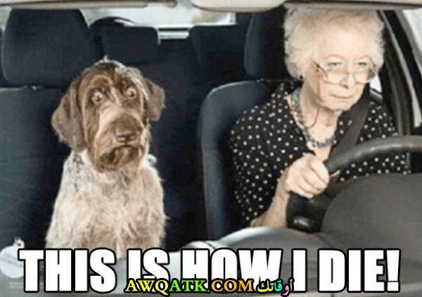 الكلب يشعر بالخطر