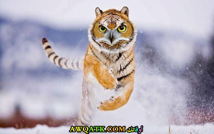 بومة على شكل نمر