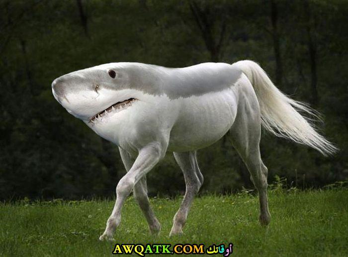 حصان برأس سمكة قرش