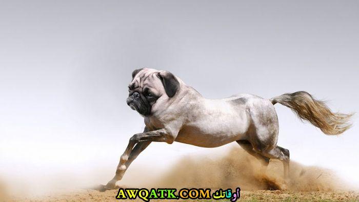 حصان برأس كلب