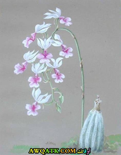 زهور رقيقة