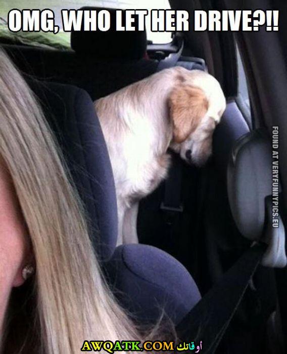 شاهد رد فعل الكلب