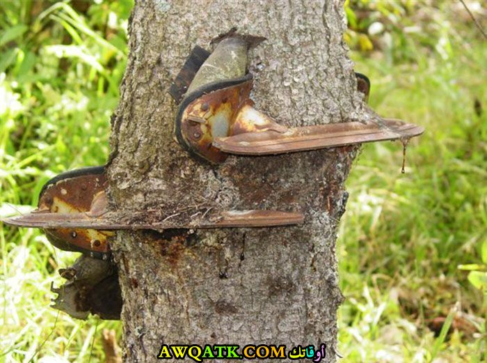 شجرة قوية جدا