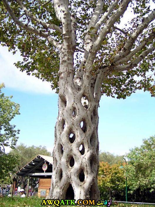 شجرة السيرك الغريبة و العجيبة يمتلكها مزارع سويدي