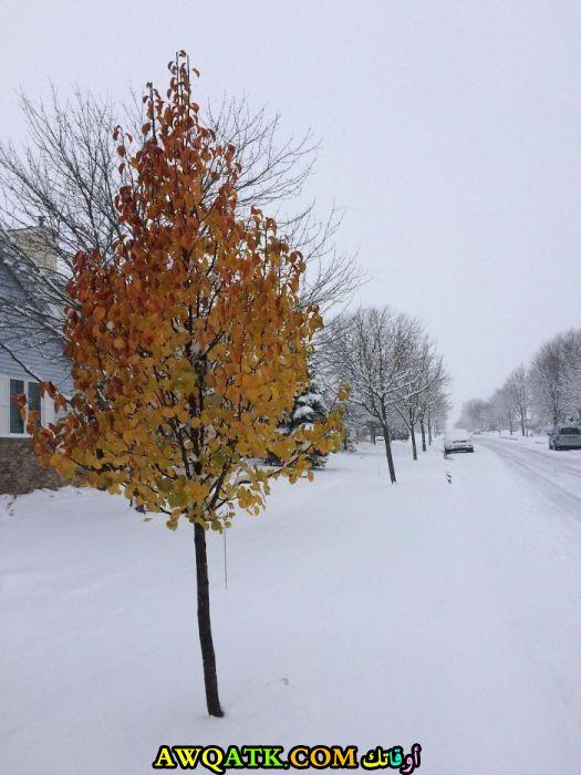 شجرة وسط الجليد