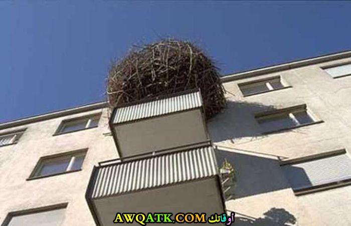 شيء عجيب في الشرفة