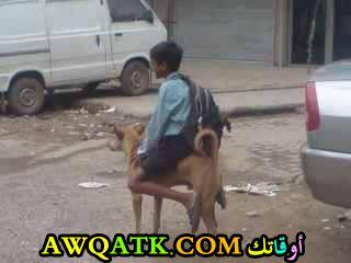 طفل يركب كلب