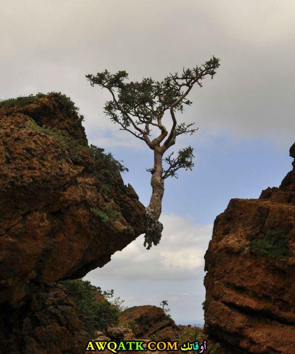 على طرف صخرة