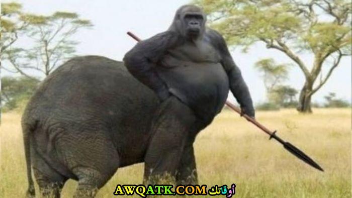 غوريلا بجسم فيل
