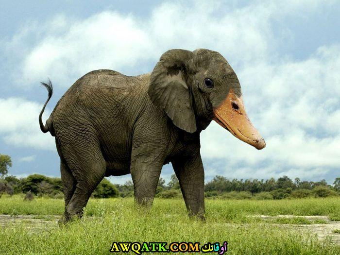 فيل برأس بطة