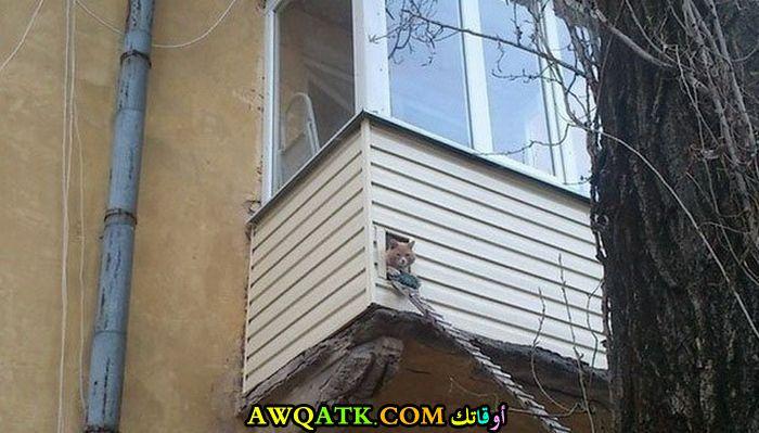 نافذة خاصة للحيوانات الأليفة