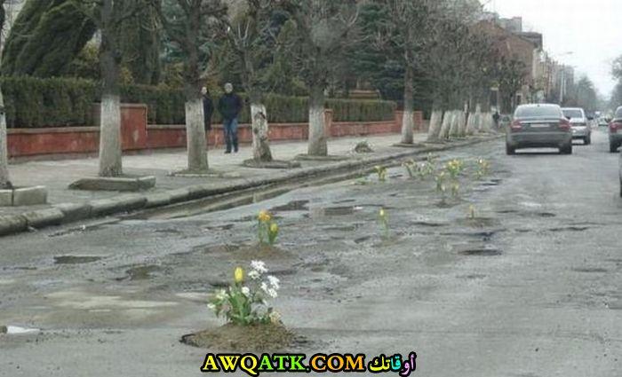 نباتات متمردة