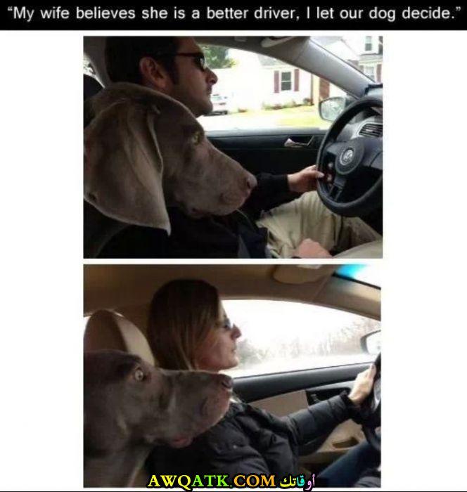 نظرة الكلب تشرح كل شيء