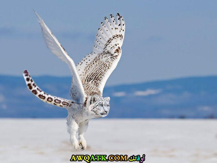 نمر يطير