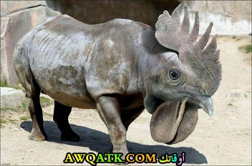 وحيد قرن برأس ديك
