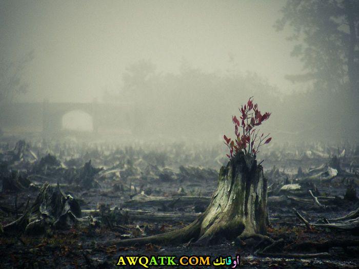 وسط الدمار و الحريق