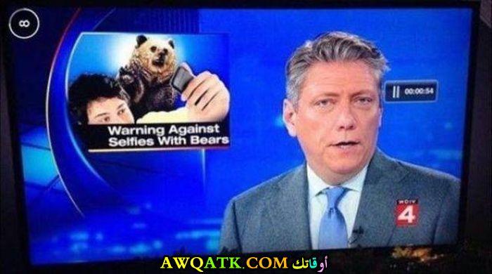الدب لا يمزح
