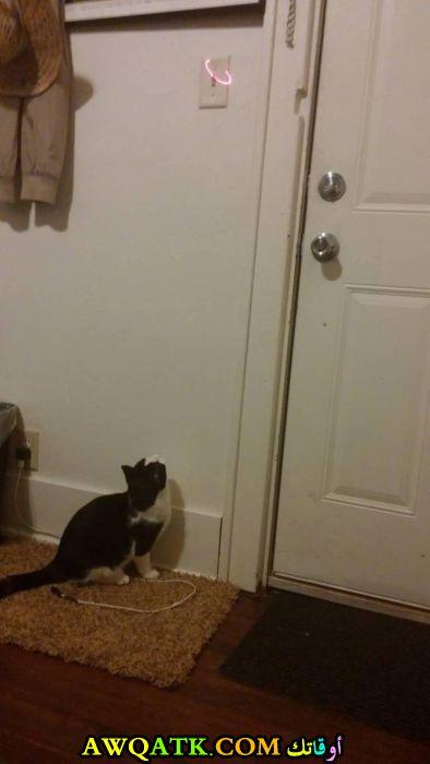القط سيطفئ النور