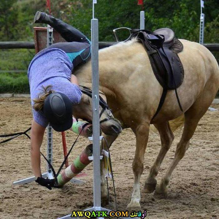 سقوط من على ظهر الحصان