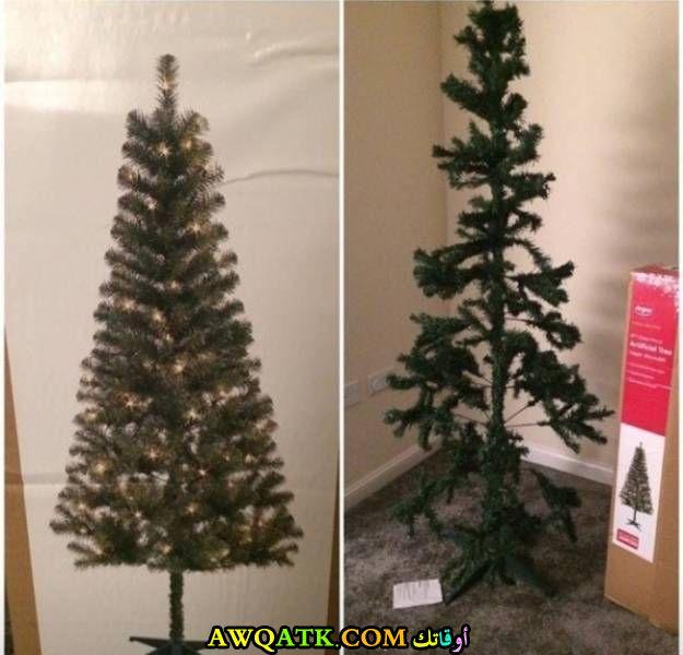 شجرة كريسماس كوميدية