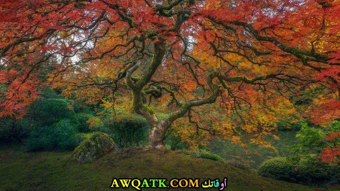 شجرة ملونة جميلة مدهشة
