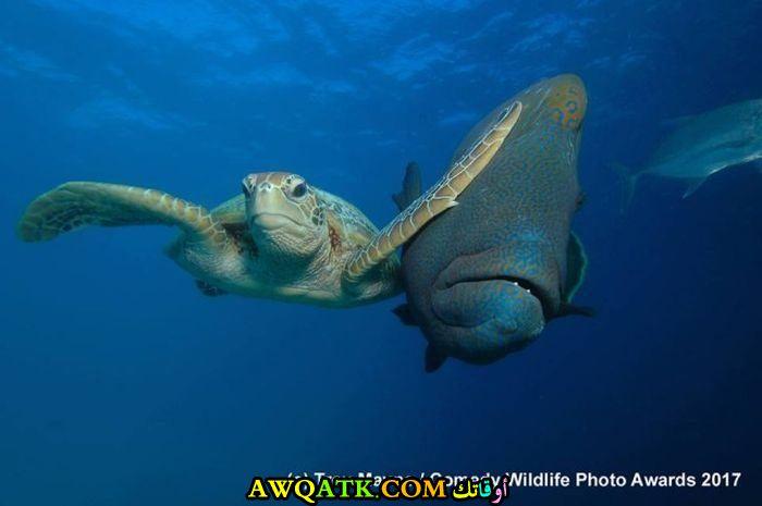صداقة تحت الماء