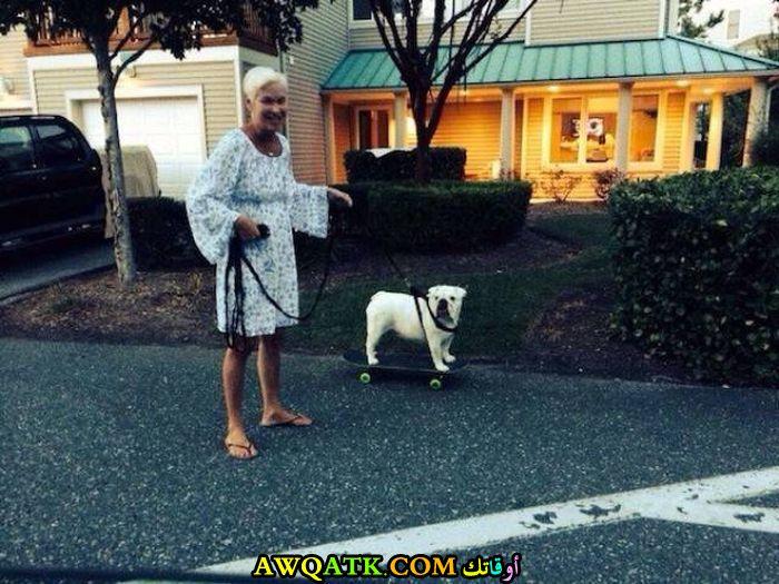 كلب كسلان