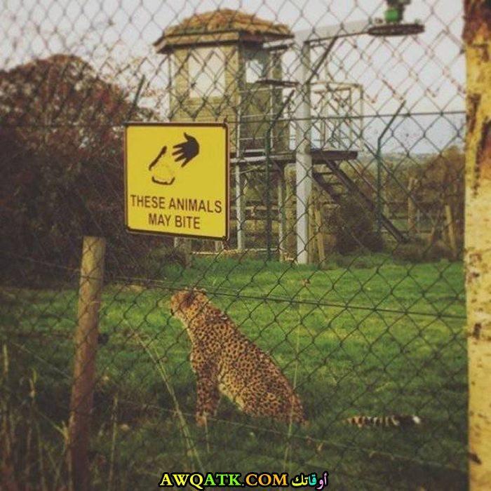 لا تعبث مع الحيوانات المفترسة