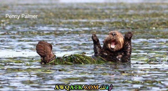 لعب في الماء