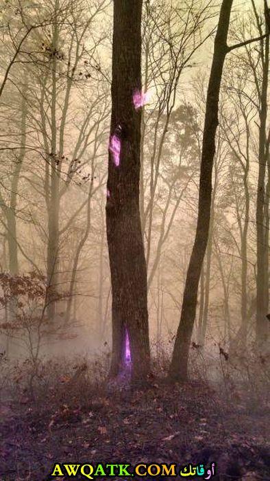 نور داخل جذع شجرة