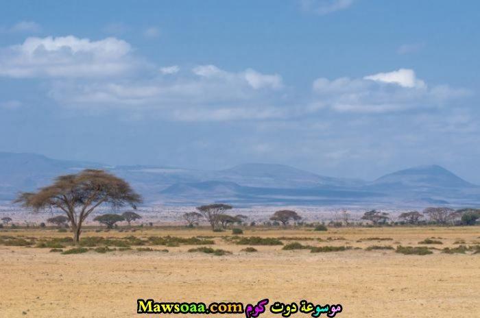 شجر في الصحراء