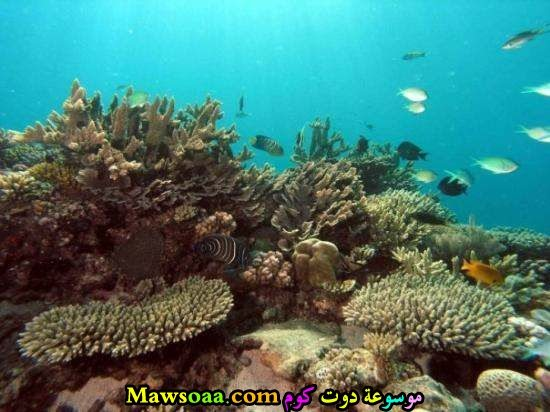 صورةمن أعماق البحر