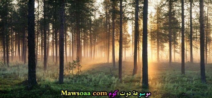 غابات خضراء