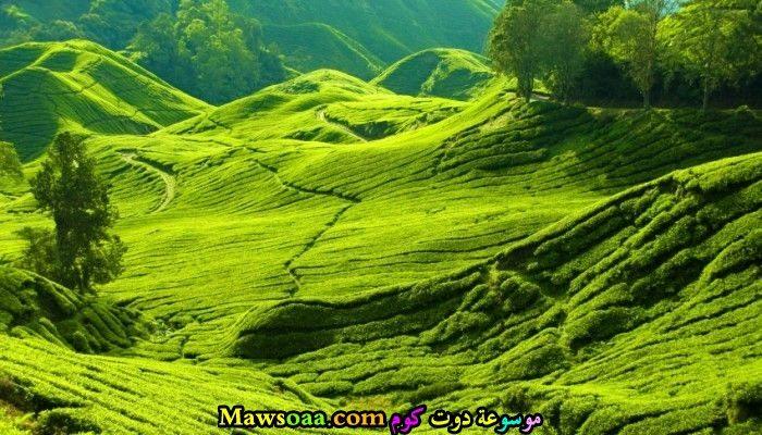 مساحات خضراء منظمة