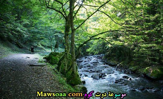 نهر في الغابة