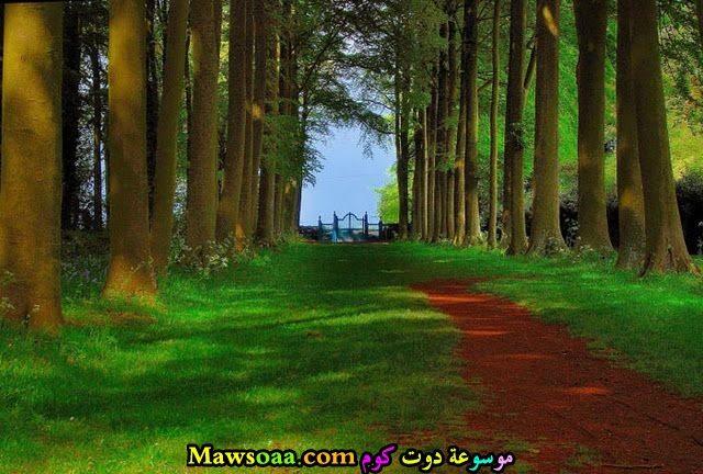 طريق يؤدي الى البحر